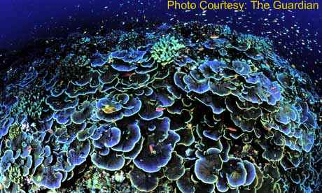 a-coral-seen-off-jarvis-i-002